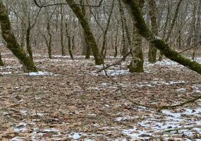 North Fork Road,West Virginia 25508,Land,North Fork Road,1100
